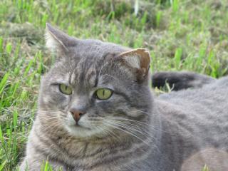 Spider chat tigré gris mâle FIV+ de 08/2005 - dpt 56 Img_0987-278e6a2